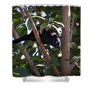 Grackle Stare Shower Curtain