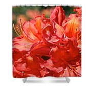 Grade A Azalea Shower Curtain