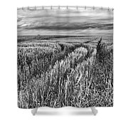 Grain Field Tracks Shower Curtain