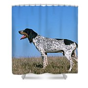 Grand Bleu De Gascogne Shower Curtain
