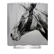 Grand Canyon Mule Shower Curtain