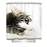 Grand Kitty Cuteness 3 High Key Shower Curtain by Andee Design