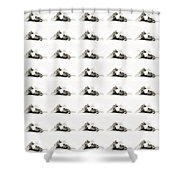 Grand Kitty Cuteness Bw 40 Shower Curtain by Andee Design