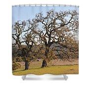 Grand Oaks Shower Curtain