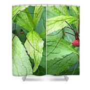 Granddaddy Spider In 3d Stereo Shower Curtain