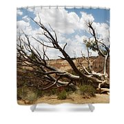 Grandfather Tree Shower Curtain
