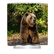Grandpa Bear Shower Curtain