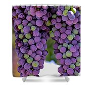 Grape Bunches Portrait Shower Curtain