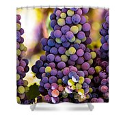 Grape Bunches Wide Shower Curtain