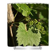 Grape Vine In Spring Shower Curtain