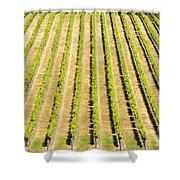 Grape Vines Shower Curtain