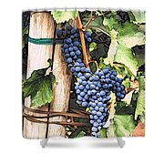 Grapes 1 Shower Curtain