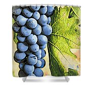 Grapes 2 Shower Curtain