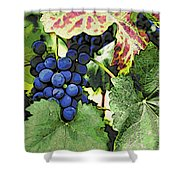 Grapes 3 Shower Curtain