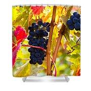 Grapes And Autumn Leaves, Napa California Shower Curtain