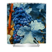 Grapes - Blue  Shower Curtain by Hannes Cmarits