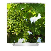 Grapes In A Vineyard Shower Curtain