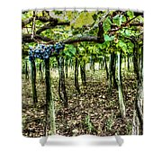 Grapes On A Vineyard Shower Curtain