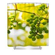 Grapes On The Vine - Finger Lakes Vineyard Shower Curtain