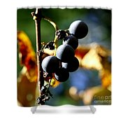 Grapes On The Vine In Square  Shower Curtain by Neal Eslinger