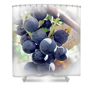 Grapes On The Vine Shower Curtain by Kathleen Struckle