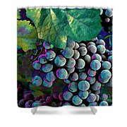 Grapes Painterly Shower Curtain