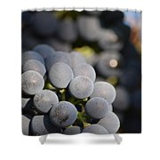 Grapes Up Close Shower Curtain