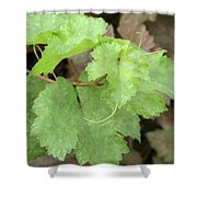 Grapevine Shower Curtain