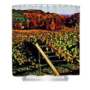 Grapevines In Vineyard, Traverse City Shower Curtain