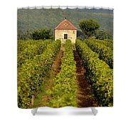 Grapevines. Premier Cru Vineyard Between Pernand Vergelesses And Savigny Les Beaune. Burgundy. Franc Shower Curtain