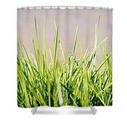 Grass Blades Shower Curtain