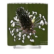Grass Bloom Shower Curtain