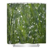 Grass Fairies... Shower Curtain