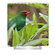 Grass-green Tanager Shower Curtain
