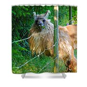 Grass Is Always Greener - Llama Shower Curtain by Jordan Blackstone