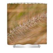 Grass Seed Head Shower Curtain