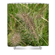 Grasses At Spaulding Pond Shower Curtain