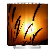 Grasses At Sunset - 1 Shower Curtain