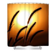 Grasses At Sunset - 2 Shower Curtain