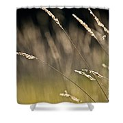 Grasses Blowing Shower Curtain