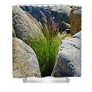 Grasses In Oasis On Borrego Palm Canyon Trail In Anza-borrego Desert Sp-ca Shower Curtain
