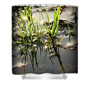 Grasses In Water Shower Curtain