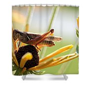 Grasshopper Antena Up Shower Curtain