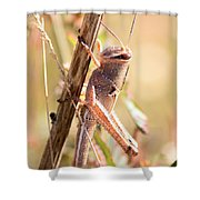 Grasshopper In The Marsh Shower Curtain