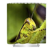 Grasshopper Macro 9402 Shower Curtain