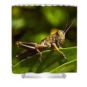 Grasshopper Macro Shower Curtain