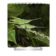 Grasshopper Mating On Grass Leaf Shower Curtain