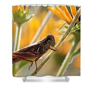 Grasshopper On Coneflower Stem Shower Curtain