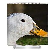 Grassy-bill Duck Shower Curtain