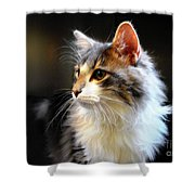Gray And White Cat Shower Curtain